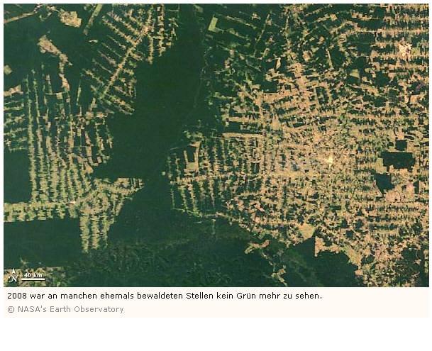 zerstörung regenwald ausmaß